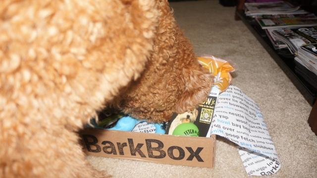 Bark Box 10:2013 2